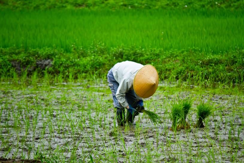 日本人農耕型民族